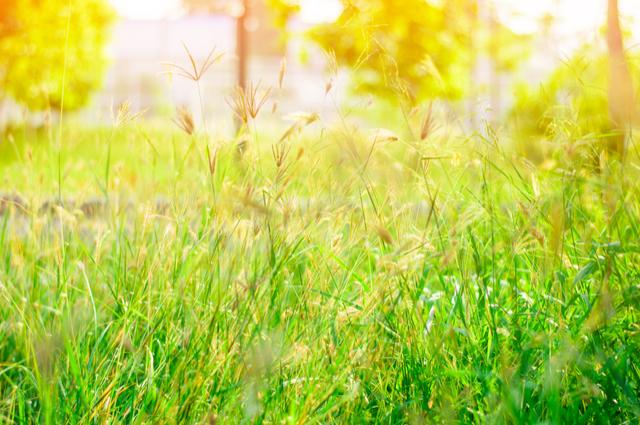 艷陽高照戀情明朗?分析你的農曆5月紫微愛情運