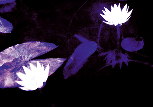 雙星組合 – 紫微破軍
