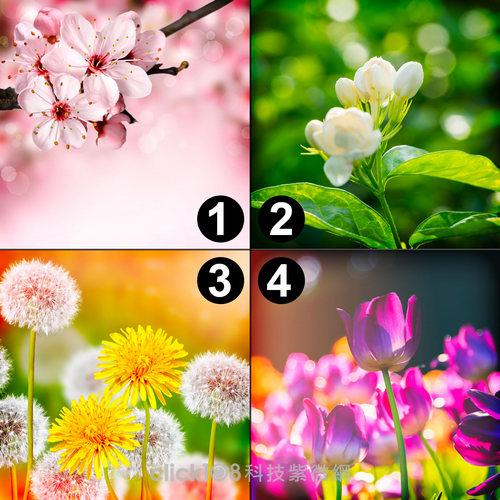 圖片心測:夢想中的花園,透視你在愛情裡有多固執?