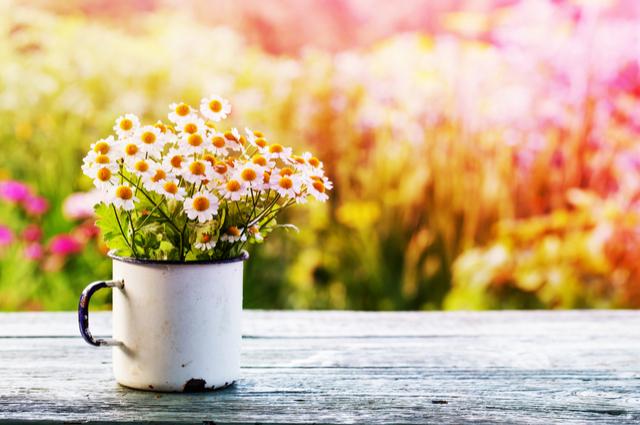 農曆4月風和日麗,運勢穩中求發展?