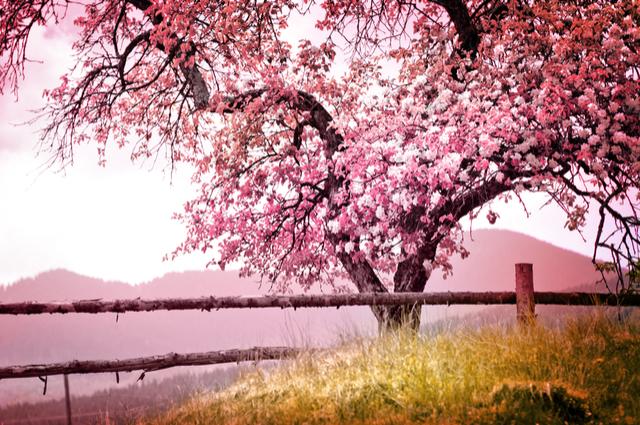 測字:今年秋冬會有桃花降臨嗎?
