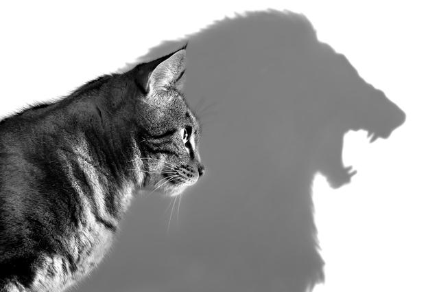 職場上你像哪種動物?結合命盤看出你的特質